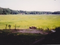 Aug of 1992 -- Grassy field or Lake?